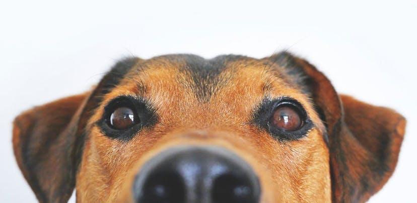 Queixas contra lojas de animais aumentam 189%